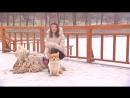 Сюжет с участием наших собак пород Вельш Корги Пемброк и Комондор