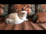 Кошка смотрит мультики