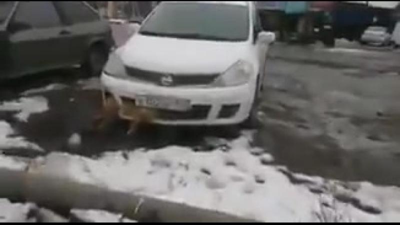 Житель Таганрога сбил собаку, она застряла в бампере его машины и он несколько дней так и ездит с ней по городу.