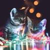 Кот перед рождеством