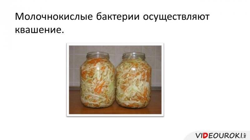 07. Роль бактерий в природе и жизни человека