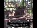 Жители Ростовской области нашли брошенный зоопаркIT'S TIME VIDEO