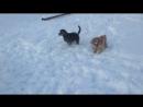 Последняя прогулка 2017-го 31 декабря, снега навалило по колено собаки счастливы ПОЗДРАВЛЯЕМ с годом Собаки!