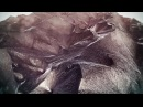 Max Cooper - Molten Landscapes - Official Video By Cornus Ammonis and Morgan Beringer