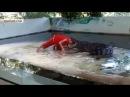 Крокодил прокусил голову дрессировщику в Таиланде