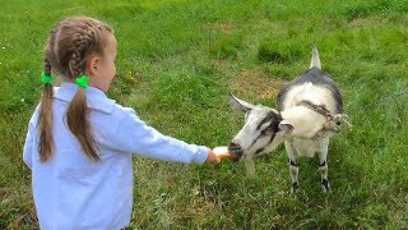 СЕЛО Кормим животных Коровы Козы Какашки СЕЛО или ГОРОД