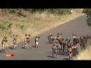 Где то в дебрях Африки 2 08 2017