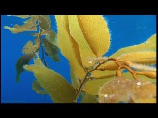 BBC Голубая планета (3). Открытый океан (Познавательный, природа, животные, 2001)