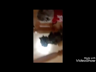 Video_20180108220008970_by_videoshow.mp4