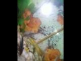 аквариум обновление 3.1.0