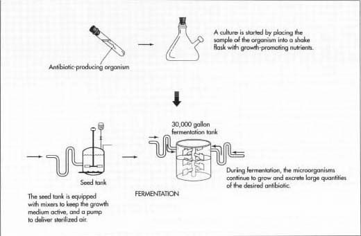 Процесс изготовления антибиотиков
