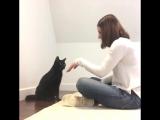 Каждый из этих котов и кошек особенный)))
