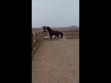 Как повеселить лошадь!
