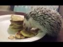 Ежик кушает оладушки