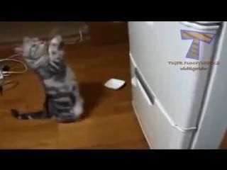 Кошачий вальс. Сергей Чекалин Cats waltz. Music Sergey Chekalin
