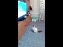 Мая смотрит программу в Мире животных