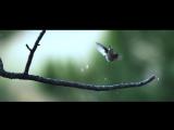 Дождь клип 2016 Это Русь official video ПРЕМЬЕРА Сергей Короленко новинки музыки