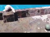 Медведица Камета в ростовском зоопарке - 20.07.17 - Это Ростов-на-Дону!
