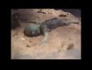 Найден живой детёныш русалки! Невероятное видео очевидца