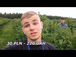 Вся правда про роботу в Польщі