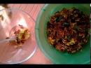 БАРХАТЦЫ. Готовим имеретинский шафран из бархатцев-любимую пряность