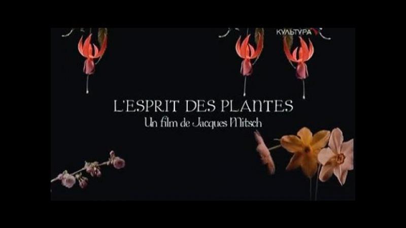 Разум растений / L'esprit des plantes (2009)