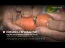 Канадка смогла вернуть обручальное кольцо, найденное на моркови в своем огороде