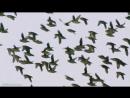 BBC Голубая планета 8 Побережье Познавательный природа животные 2001