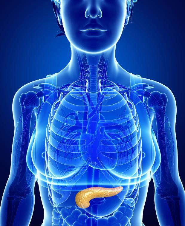 Когда у человека диабет типа 1, поджелудочная железа не может правильно продуцировать инсулин.