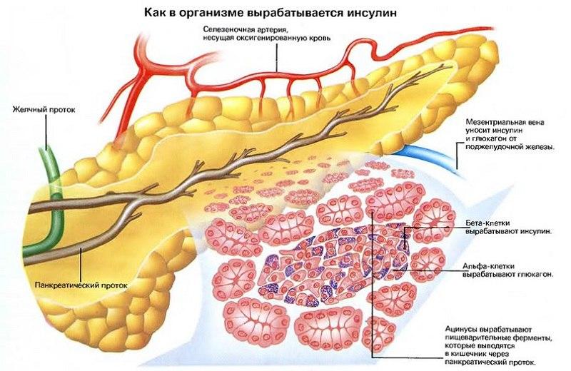 Люди с диабетом типа 1 имеют высокий уровень сахара в крови, потому что их организм не вырабатывает инсулин.