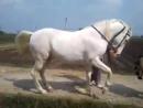 Лошадка танцует.