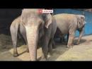 Слонов водят на прогулку по улице в Краснодаре