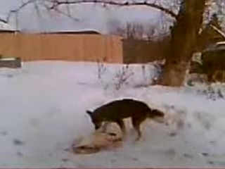 Собака трахает ЗАМЕРЗШУЮ ДОХЛУЮ СОБАКУ