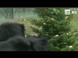 Животных в берлинском зоопарке накормят