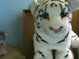 Тигр Шоу (Выпуск 1)