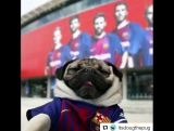 Самый милый фанат «Барселоны» в истории