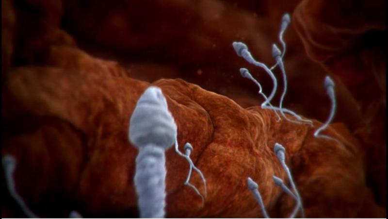 BBC: Внутри человеческого тела (2011)