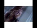 TVD/the 100/Gossip girl/Scream queens vine💥
