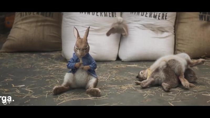 Кролик Питер.Смотрите в кинотеатре «Эра» с 22 марта.