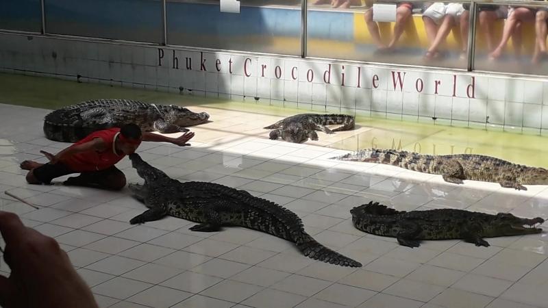 Поцелуй крокодила
