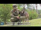Собака – лучший друг солдата