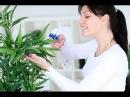 ТОП-10 ПОЛЕЗНЫХ ДЛЯ ЗДОРОВЬЯ комнатных растений