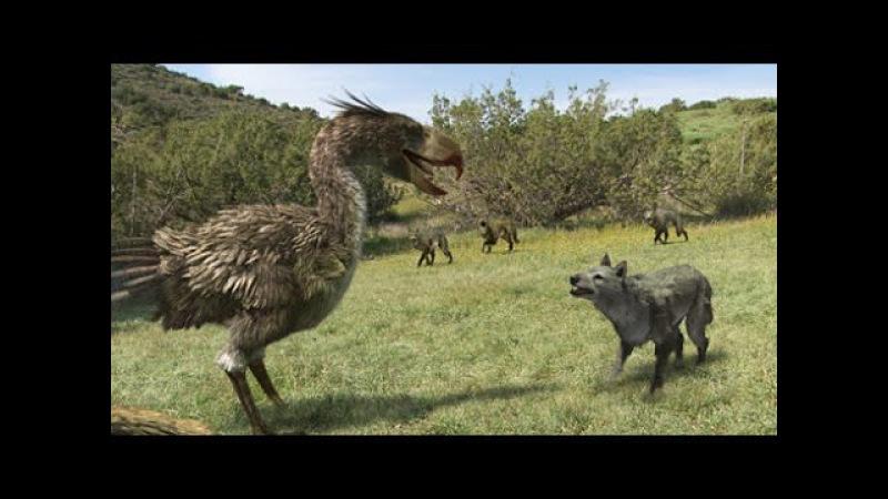 Документальный фильм.Хищная птица ящер.Интересный фильм про ящера.