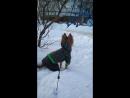 Моя любимая собака Герда, гуляет в новой куртке