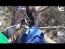 Кот 7 дней просидел на дереве