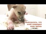 Собаку облили клеем и оставили умирать, но потом произошло... (6 sec)
