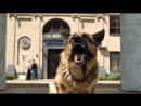 """""""Пёс-2"""" - новые серии - с 2 октября в 21.40 на НТВ"""