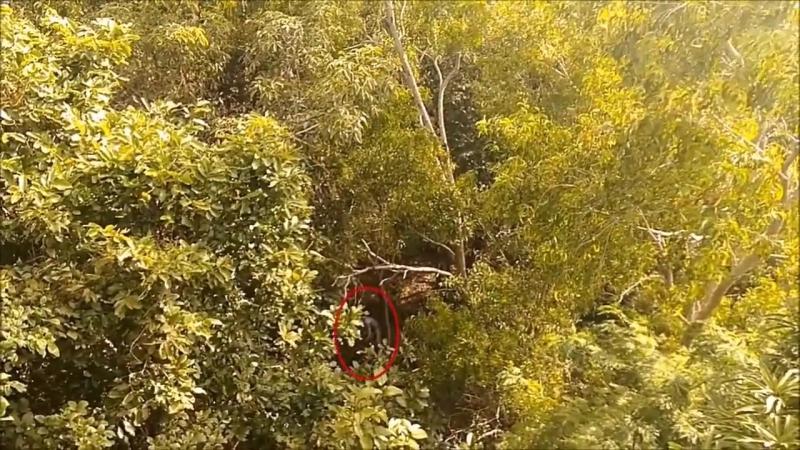 ??..случайно снятое..существо было захвачено на видео во время прогулки по лесу, около бывшего военного здания..