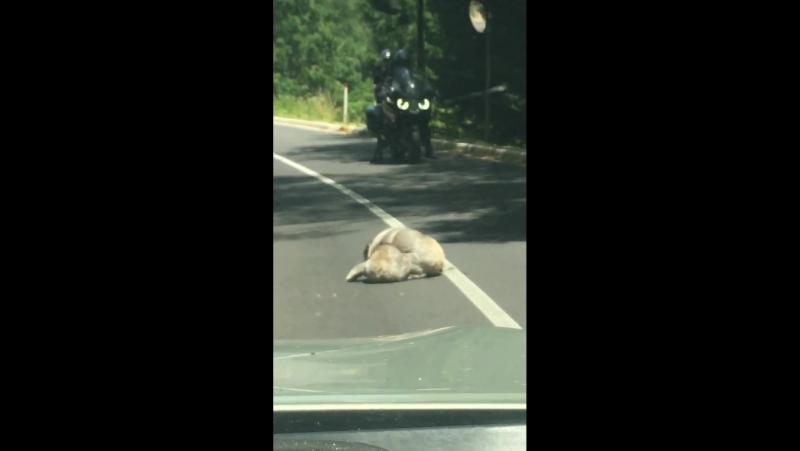 Слабонервным не смотреть! Жестокая драка братух-борцух на дороге в Австралии ...