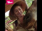 Настя Ивлеева кормит жирафов
